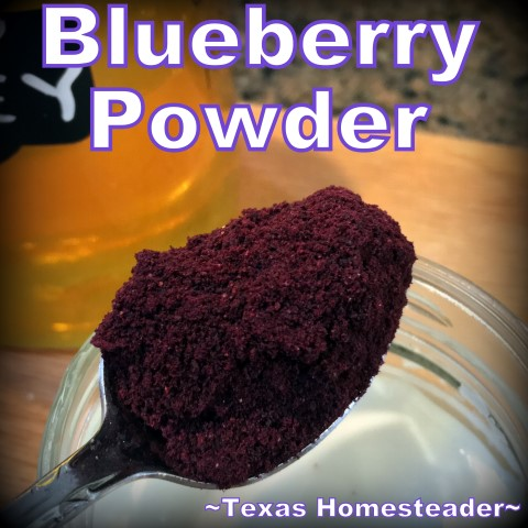 Dehydrated Blueberry Powder. Convenient to store in the pantry and stir into yogurt or pancake or muffin batter #TexasHomesteader