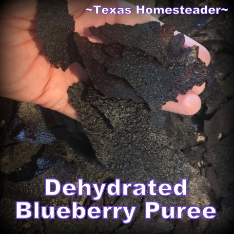 Dehydrated blueberry puree. Dehydrated Blueberry Powder. Conventient to store in the pantry and stir into yogurt or pancake or muffin batter. #TexasHomesteader