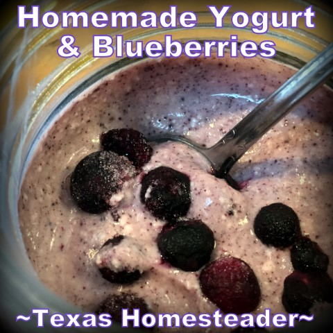 Dehydrated Blueberry Powder. Conventient to store in the pantry and stir into yogurt or pancake or muffin batter. #TexasHomesteader