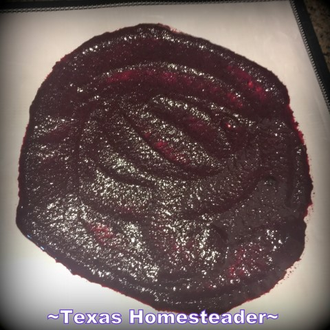 Blueberry puree on dehydrator tray. Dehydrated Blueberry Powder. Conventient to store in the pantry and stir into yogurt or pancake or muffin batter. #TexasHomesteader