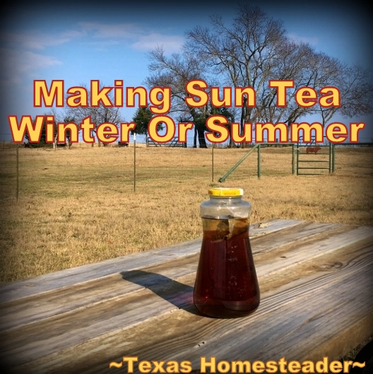 Sun Tea - quick to brew using the power of the sun whether winter or summer. A delicious, healthy and trash free beverage. #TexasHomesteader