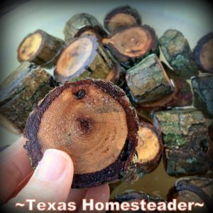 Soaking pecan wood rounds. Delicious Smoked Pork using pecan wood smoke. Delicious. And shredding all that meat can be done in minutes using our shortcut. #TexasHomesteader