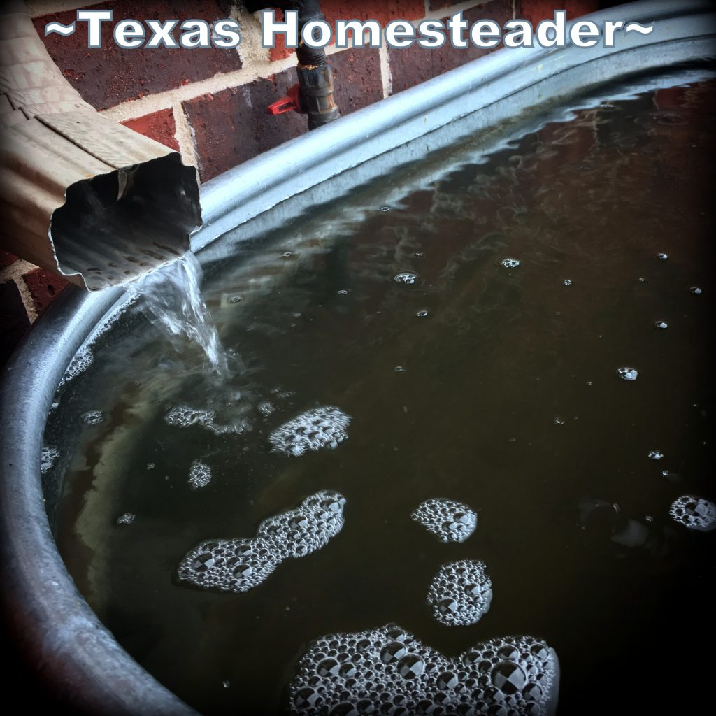 100-Gallon galvanized water trough. See the three different rainwater catchment systems that work best for our homestead. We irrigate our gardens 100% with captured rainwater #TexasHomesteader