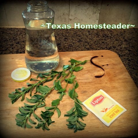 Sweet tea - sun tea. Stevia is a plant you can grow in your edible landscape. Harvest the leaves to make your very own home-grown sweetener. #TexasHomesteader