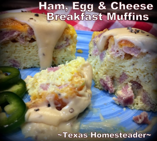 Easy ham egg & cheese breakfast muffins. Quick to make, easy to transport, and they're delicious! Serve with cream gravy. #TexasHomesteader