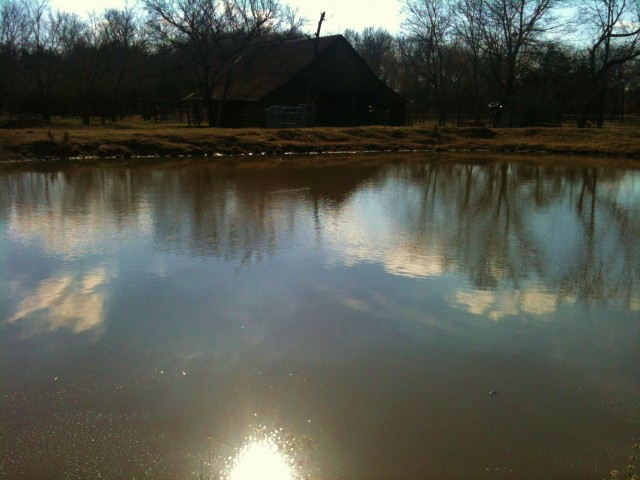 After a drought, the ponds are filling fast. #TexasHomesteader