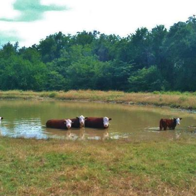 Now THIS is our idea of a group of beautiful girls cooling off in the pool! #TexasHomesteader