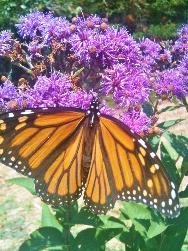 www.TexasHomesteader.com - Texas Homesteader - Voluntary Simplicity, Gardening, Food Preservation, etc. #TexasHomesteader