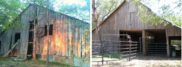 We have two old 1880's barns. #TexasHomesteader