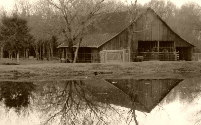 D'ya ever wonder what it looks like inside an 1880's barn? Well come along with me for a tour of the inside! #TexasHomesteader
