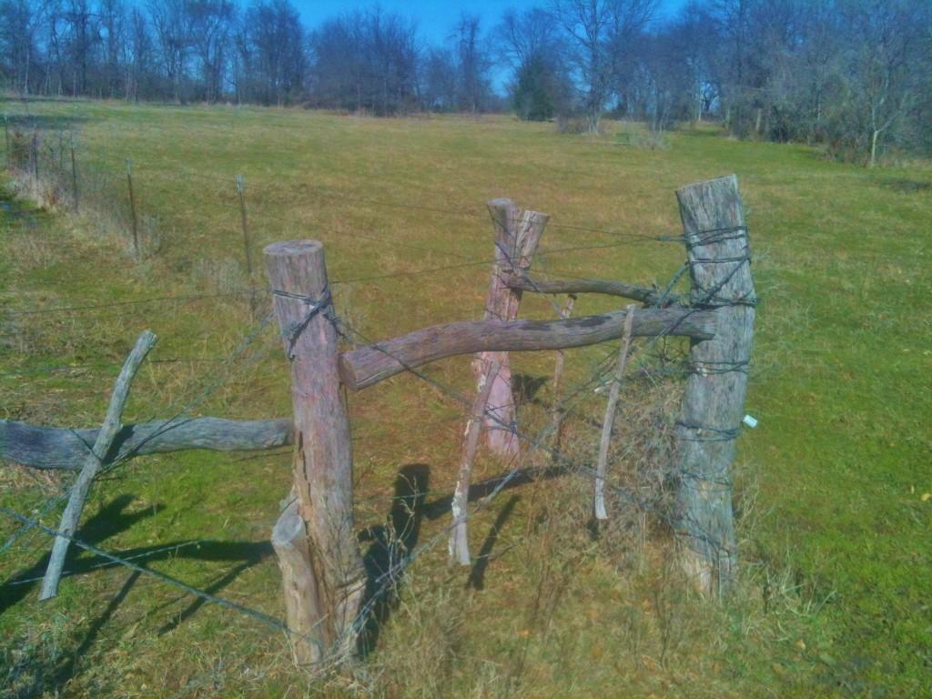 Bois D'Arc Posts