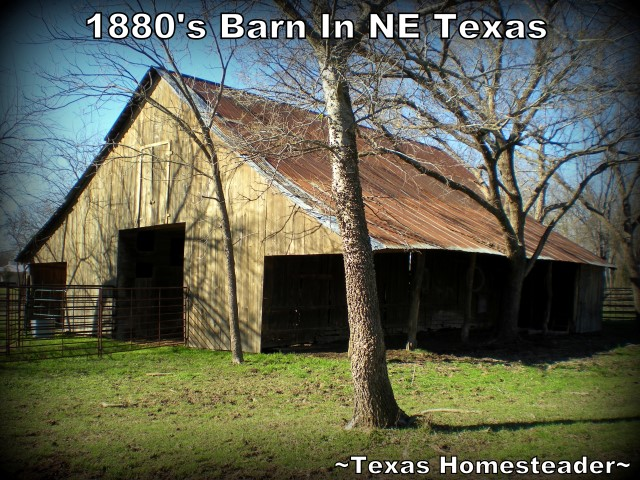 Bois d'Arc posts used throughout building this 1880's Texas barn #TexasHomesteader