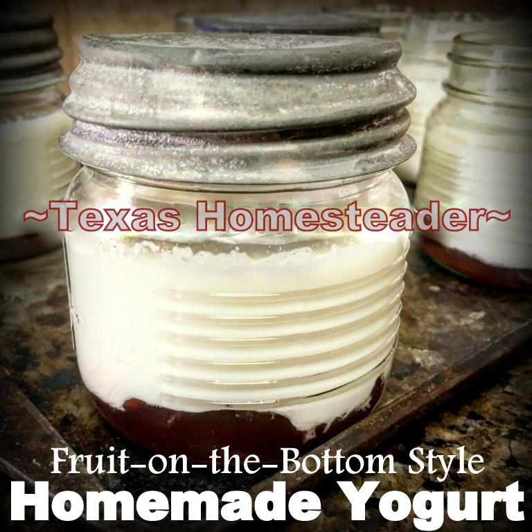 Homemade yogurt in single-serve jelly jar, fruit on the bottom. #TexasHomesteader