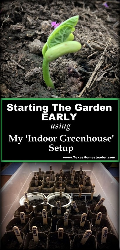 I like to plant heirloom seeds, but I want actual seedlings to go into my garden as early as possible. Come see my 'indoor greenhouse' setup. #TexasHomesteader