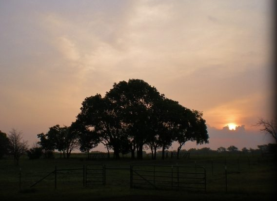 The beauty in the still of the morning on our Texas ranch touches my heart. #TexasHomesteader