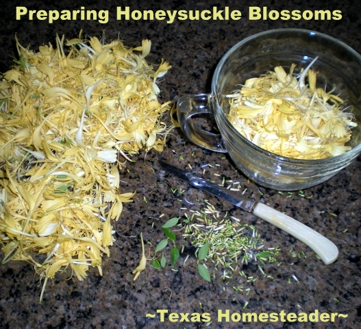Preparing Honeysuckle Blossoms. This honeysuckle jelly made with the blossoms of honeysuckle tastes just like the blossoms I remember as a child - absolutely delicious! #TexasHomesteader