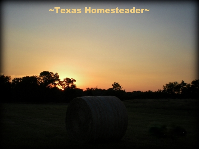 This beautiful shot of the first peak of sun touching a brand-new bale of hay. The work day of moving and stacking hay is about to begin. #TexasHomesteader