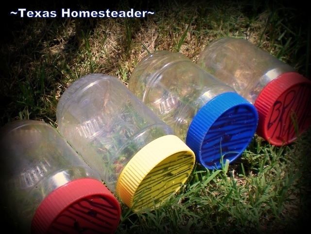 Plastic Jars = Bug Catchers For Kids. What items can be repurposed from their original use before throwing away? Read what we do with glass and plastic jars and holey socks. #TexasHomesteader