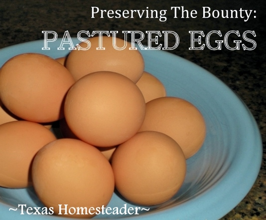 Although you can't freeze fresh eggs in the shell, there is an easy way to preserve eggs for future use by freezing. #TexasHomesteader