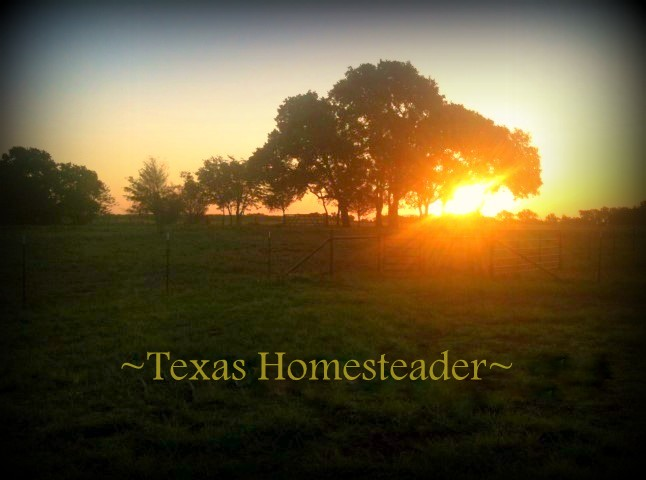 Did you ever wonder what it's like to live & work on a NE Texas ranch? Come with me to see what a typical day looks like - we love it! #TexasHomesteader