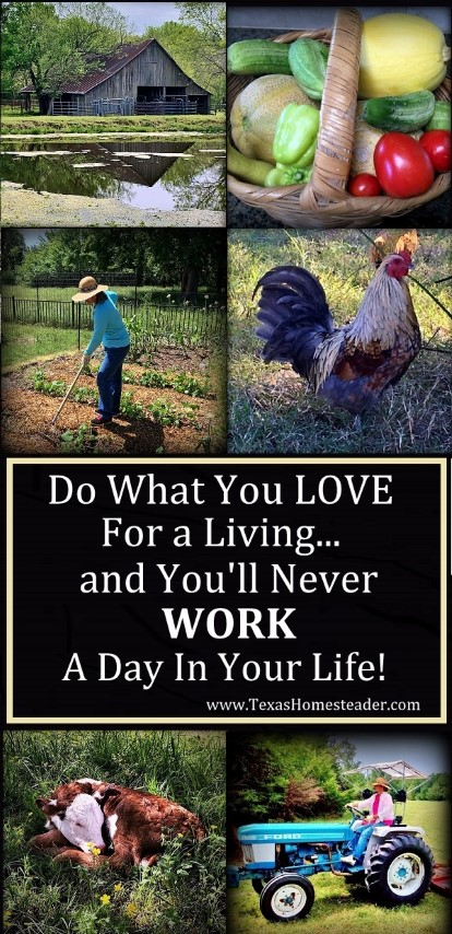 "Do what you love for a living and you'll ""Never Work A Day in Your Life"". How true this wise old statement is! See what it means to me. #TexasHomesteader"