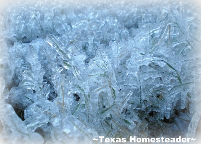 The ice is damaging, but can be beautiful as well. #TexasHomesteader