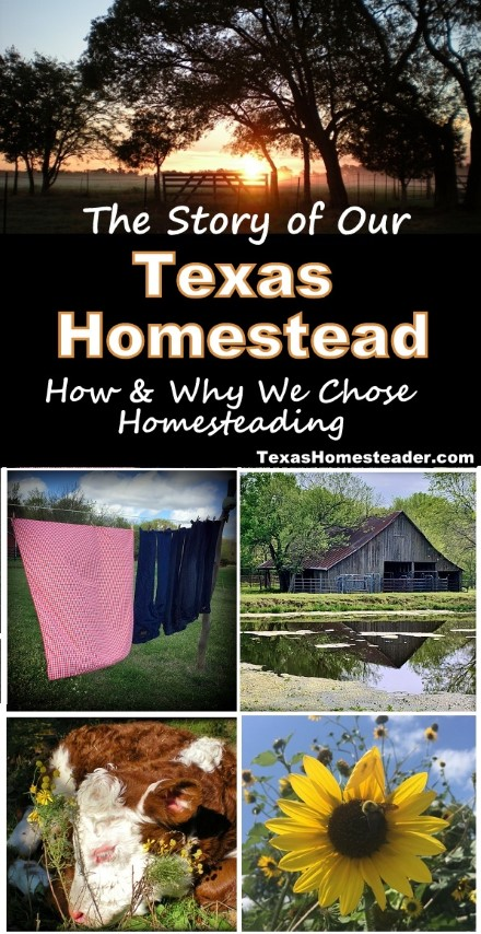 Many people wonder how we came to be Texas Homesteaders. Here's our story. #TexasHomesteader