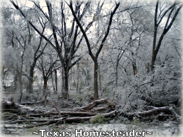 """Winter storms create problems. It's not work if you love what you do. I've heard the saying """"Bloom Where You're Planted"""". I'm so blessed that I've been planted here! #TexasHomesteader"""