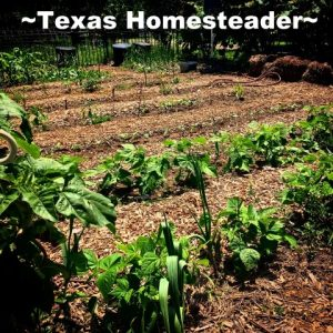 Free Wood Mulch. It's easy to find little ways to save money. It just takes a different mindset. Come see 5 frugal things we did to save money this week. #TexasHomesteader