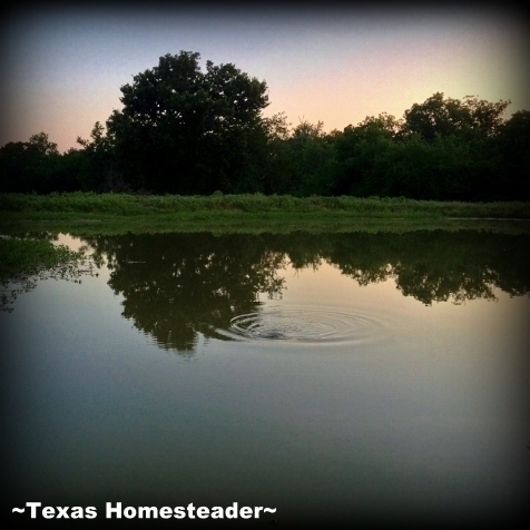 Our actions are much like a stone tossed into the water, a ripple effect that touches the surrounding area & radiates outward. #TexasHomesteader