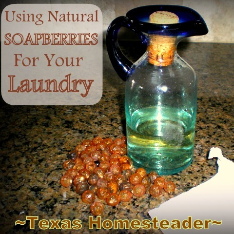 Read Our Experience Using Natural SOAPBERRIES For Environmentally-Friendly Cleaning Of Our Laundry #TexasHomesteader