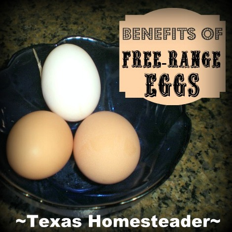 I've learned how much healthier free-range eggs are - but I've learned so much more about them too. Read all the benefits. #TexasHomesteader