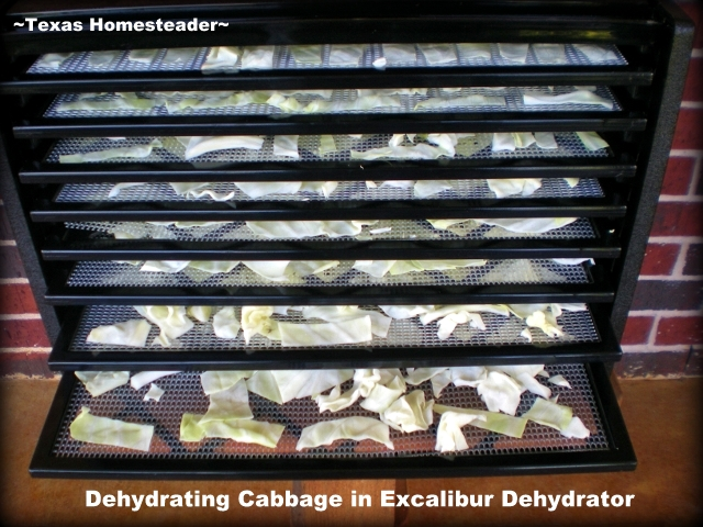 Dehydrating cabbage in a 9-tray Excalibur dehydrator is easy and preserves that fresh cabbage to use months later. #TexasHomesteader
