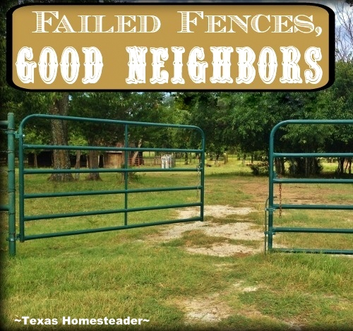 Good neighbors come to your aid in times of need. Read what happened when we experienced Failed Fences But GOOD NEIGHBORS! #TexasHomesteader