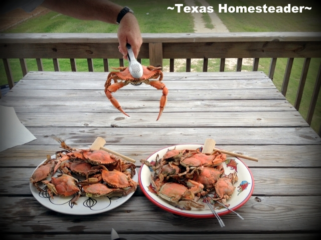 Fresh crab. What a fun week we had at Surfside Beach in south Texas. We rented a beach house & enjoyed the beach too. Come see what fun we had! #TexasHomesteader