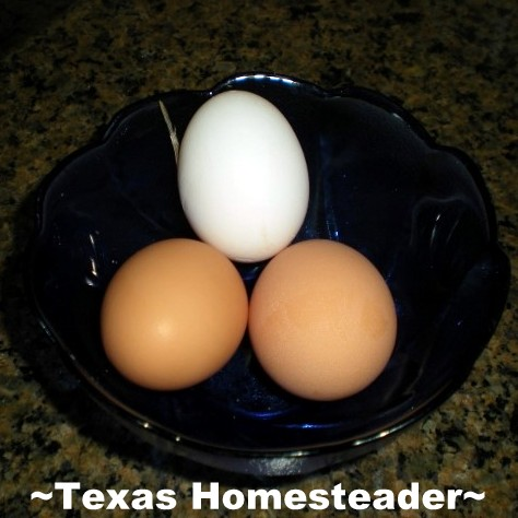 I guess it's not an old wives tale after all, I discovered it's true you can tell what color eggs your hens will lay by the color of their ear lobes! #TexasHomesteader