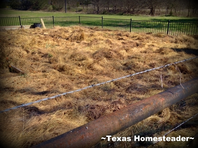 Deep mulching the whole garden. Sudden warmth has gotten me ready to start preparing my veggie garden for planting. This year I'm doing something different - check it out! #TexasHomesteader