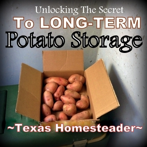 Storing Potatoes Long-Term: I've heard that you can store potatoes for months on end if you do it right. I need some potato-storage advice! #TexasHomesteader
