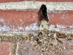 Ants are coming into our home, I don't want to lay out poison. What's a crunchy-green country girl to do? Check this Homestead Hack! #TexasHomesteader