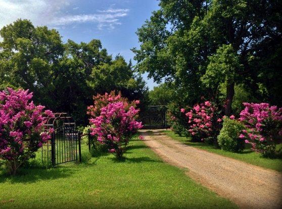 Wordless Wednesday: Tree-Lined Road To My Heart #TexasHomesteader