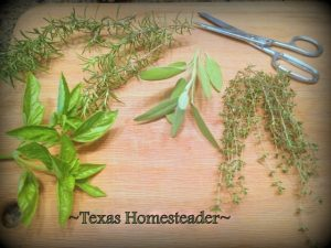 Drying herbs to to eliminate food waste. Can you eat your compost? Come see ways I've saved food previously destined for the compost pile for delicious use in my kitchen. #TexasHomesteader