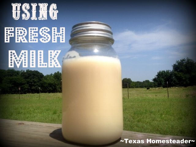 Using FRESH MILK - I'd always wanted to try milking one of our cows to get fresh milk for our family, see what I did with the FRESH MILK! #TexasHomesteader