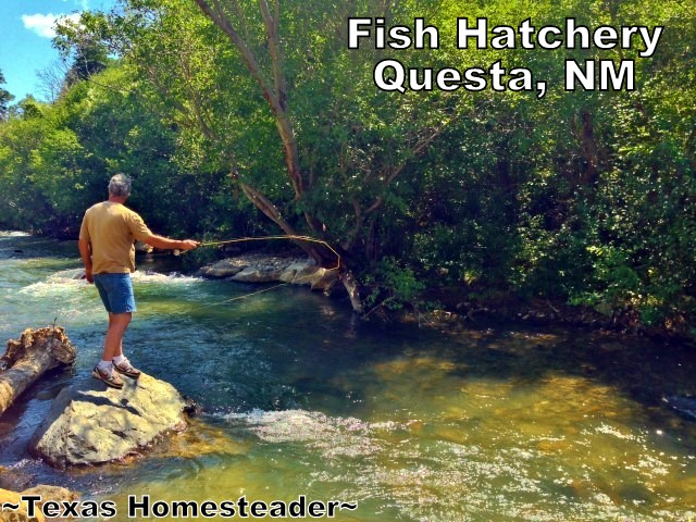 Questa NM Fish Hatchery. Although Red River, NM is probably best known for its ski facilities. But I much prefer to visit in the summer, it's absolutely beautiful! We visited surrounding areas too. Check out the FUN! #TexasHomesteader