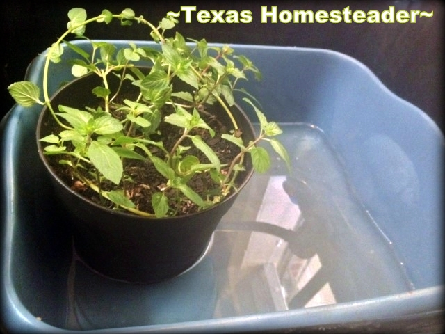 Homestead Hack: Keeping Plants Watered