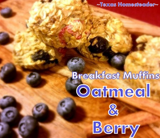 Easy SUGAR-FREE Oatmeal & Berry Muffin recipe, healthy as well as sweet enough that they would work for snack or healthy breakfast. #TexasHomesteader