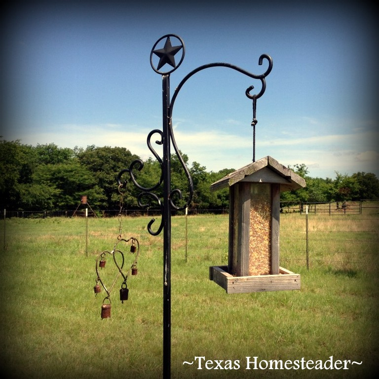 Birdfeeder. It's a wondrous world in the country, especially when viewed through a city-girl's eyes. Come see & experience with me #TexasHomesteader