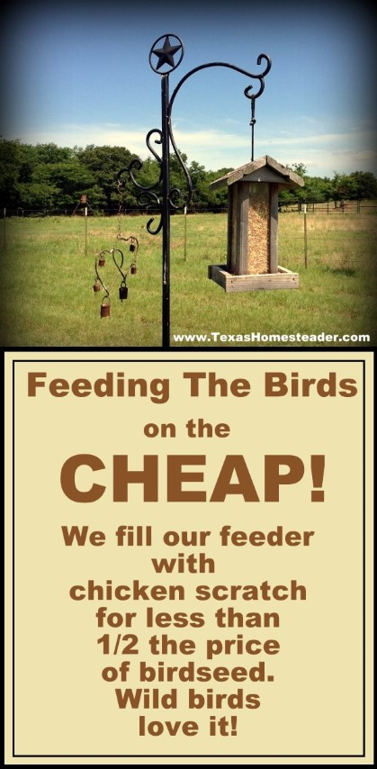 We fill our wild bird feeder with chicken scratch for less than HALF the price of wild bird seed. The birds love it! #TexasHomesteader