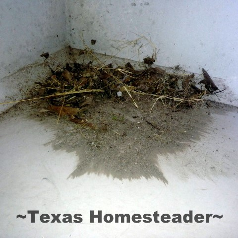 Cleaning the storm shelter. TORNADO SEASON is right around the corner so I'm preparing our storm shelter for those late-night runs to safety. See my preparations. #TexasHomesteader
