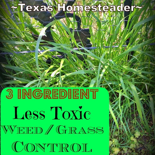 A Non-Toxic weed killer in the garden! I wonder if I can use a less toxic grass & weed control... As it turns out, YES! #TexasHomesteader