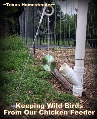 Check out this Homestead Hack - Sometimes it's true you can use low-tech methods to successfully address a problem. Love it! #TexasHomesteader